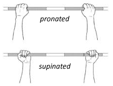 pronated-supinated-grip